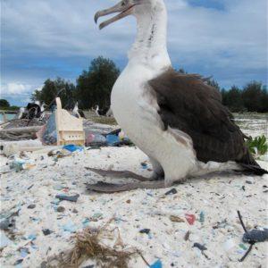 L'albatros, le choc écologique