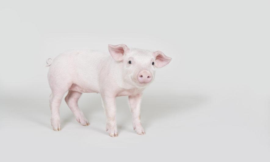 nouvel-an-chinois-2019-que-nous-reserve-l-annee-du-cochon-de-terre