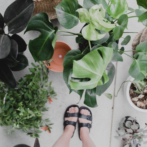 l-incroyable-vie-secrete-des-plantes