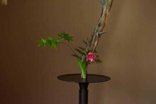 a-la-decouverte-des-plantes-sauvages-comestibles