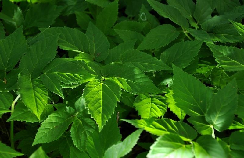 covid-19-ce-que-nous-devons-apprendre-des-plantes